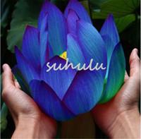 Sementi di fiori Semi di loto blu Piante acquatiche Piante acquatiche Midnight Blue Lotus pianta di ninfea per giardino di casa 10 pz