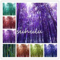 대나무 씨앗 희귀 한 Phyllostachys Aureosulcata 식물 홈 가든 분재 나무 집을 짓기 위해 사용 Jardin Semillas 50pcs / bag