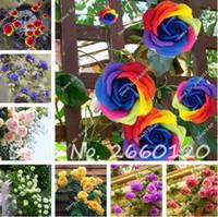 큰 판매 100 PCS 희귀 한 장미 나무 씨앗, 화분, 발코니 마당 공장 DIY 홈 가든 아름다운 꽃 씨앗을 선택하는 24 가지 색상