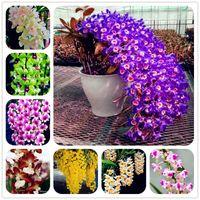 Envío gratis 100 Unids / Empaque Semillas de Dendrobium Semillas de flores en maceta Completar La tasa de florecimiento 95% de colores mezclados Sementas