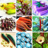 120 pçs / saco sementes de Okra Da Herança, sementes de hortaliças Verdes, Orgânicos Não-OGM alimentos Para O Jardim Do Rim Suprimentos Para O Divertido Jardim Do Campo