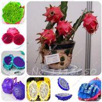 100 Pz / borsa Rari Mini Pitaya Semi Albero Bonsai, Arcobaleno Carne Dragon Seme di Frutta, Sementi perenni Piante in vaso per Giardino di Casa