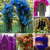최저 가격! 100 Pcs 향수 레인보우 등반 식물에 의해 꽃 씨앗, Coulourful 꽃 바위 유채과 야채, 꽃 씨앗 홈 가든에 대 한