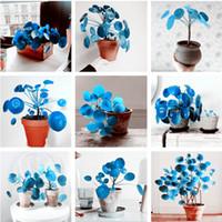 100 stks zeldzame blauwe spiegel gras bloem zaden vetplanten plant gras zaden diy bonsai pottuin huis exotische plant interessant