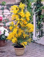 Albizia Julibrissin 나무 씨앗, 미니 화분 분재 나무 씨앗, DIY 가정 정원 분재, 20 A03