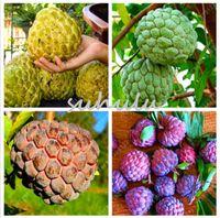 10 шт. Soursop фрукты, (graviola annona muricata), многоцветные sweetsop семена вкусные семена фруктов сахарное яблоко завод в бонсай