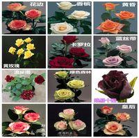 Commercio all'ingrosso a buon mercato nuove varietà semi di fiori colorati rosa 10 colori 60 semi per confezione Semi di fiori splendidi per giardino