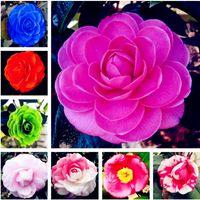 Grosses soldes! 10 graines de camélia, graines de fleurs de bonsaï, couleur rare, plante en pot de bonsaï d'intérieur / extérieure pour jardin facile à cultiver