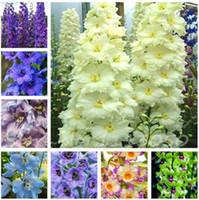 60 Unids Dendrobium Semillas Japonesa Rhynchostylis Raras Phalaenopsis Orquídeas-plantas de semillero Garden Home Planting Indoor Plant Flower Seed
