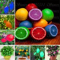 20 PC 희귀 레인보우 레몬 씨앗 유기농 과일 레몬 트리 씨앗 홈 가든 과일 공장 다채로운 분재 레몬 씨앗을 먹을 수있다