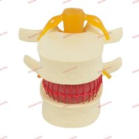 Human anatomy skeleton Spine Lumbar Disc Herniation Teaching...
