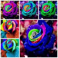 30 Unids Semillas de Rosa, Semillas de Flores de Rosa, Bonsai de Interior Balcón Semillas de Flores, 24 Plantas de Maceta de Crecimiento Natural de Color para la Decoración del Hogar
