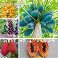 30 Ps / sac Dwarf Hovey Papaye Graines Bonsaï Graines de Fruits Biologiques Graines D'arbres Rare Délicieux Fruits Plante Papaye En Pot Pour Maison Jardin