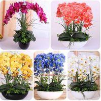 Семена орхидей высокая моделирование цветок фаленопсис орхидеи растения Фаленопсис орхидеи семена DIY Главная сад-100 шт для продажи
