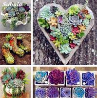 200 Pieces / Bag Best Selling! 즙이 많은 선인장 씨앗 Lotus Lithops Bonsai Plants Home Gardening 화분 발코니 꽃 종자