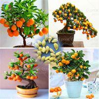 30 Pz / borsa Bonsai Orange Tree Seeds Organic Sweet Fruit Tree Seeds Per Flower Pot Planters Molto grande e delizioso