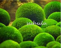 Nouvelle arrivee ! 100 pcs / sac aquarium Eau Herbe rare algues vertes aquatiques graines de plantes réservoir de poissons d'intérieur embellissant des graines de plantes