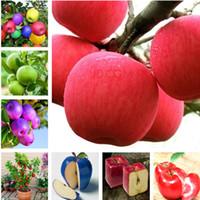 무료 배송 10 개 사과 씨앗 과일 씨앗 실내 분재 식물 꽃 씨앗, 난쟁이 분재 애플 과일 나무 씨앗 DIY 홈 가든
