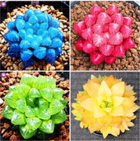 Bonsaï Fleurs Intérieures Plantes Succulentes 100 Pcs / Sac Mix Lithops Graines Rare Succulentes Graines Vivre Pierre Bonsaï Mini Jardin Des Plantes