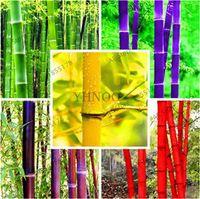 30 Pcs Sementes de Bambu Gigante Rara Colorido Moso Bambu Sementes Bambus Lako Sementes De Bambu Profissional Pacote para Casa Jardim