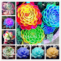 Vendita 100 Pz Mini semi di Succulente loto Lithops Pseudotruncatella Bonsai Rari Semi di Succulenza giardino domestico vasi da fiori fioriere