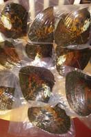 Toplu 10 adet Vakum Paketlenmiş Büyük Canavar Istiridyeler ile 20-30 adet Doğal İnciler Kültürlü Tatlısu Istiridye Kabuk Inci Çiftlik Tedarik Hediyeler BP012