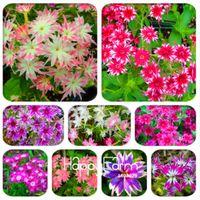 2018 Venda quente! 100 Pcs Phlox Plantas, Flox Phlox Sementes de Flores Bonsai Sementes de Flores 10 Cores Em Vasos Diy Casa Jardim Planta