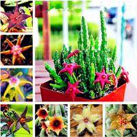 Stapelia pulchella Semi Lithops Mescolare Succulente Pietra Cactus Semi Rari Per Giardino Domestico Fiore Piante Bonsai-100 Pz