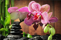 Diamond embroidery flower pink orchid diy diamond painting c...