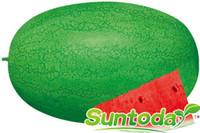 Suntoday малиновый сладкий арбуз дыня Citrullus lanatus китайские семена фруктов азиатское садовое растение гибрид без ГМО органические свежие семена