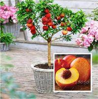 달콤한 복숭아 씨앗, 가을 붉은 복숭아 나무 과일 씨앗 Drawf 실내 분재 홈 가든 식물 화분 10 개들이 무료 배송