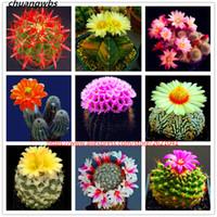 100 Pz / borsa Mini Cactus Semi Rari Succulente Piante Erbe perenni Bonsai Pot Semi di Fiori Pianta Interna Per La Casa Giardino