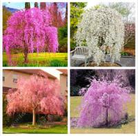 10 قطع مختلطة اليابانية بذور شجرة بونساي ساكورا يبكي الكرز شجرة diy الرئيسية حديقة قزم ساكورا زهرة جميلة
