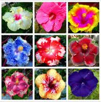 100ピース/バッグミックスハイビスカスの花の種の巨大なハイビスカスの種子盆栽の花の種の屋外の植物の種のための屋外の植物の種子