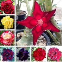 Vente chaude 5 pcs / sac Desert Rose graines adenium obesum graines Bonsaï Fleur graines en pot plante pour jardin de la maison 100% vraie graine
