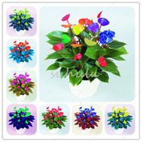 Verkauf! 50 Teile / beutel gemischt Anthurium Samen Topf Bonsai Blume Mehrjährige Blüte Ständig Balkon Pflanze Für DIY Hausgarten