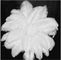 50 Pcs  Lot White Ostrich Tail Feathers 30 - 35cm Soft Fluffy...
