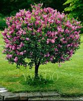 Японский сирень семена бонсай цветок семена растений очень ароматный 50 частиц / лот K013