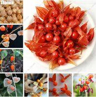 بذور الإرث Physalis الحلو الفاكهة بذور الخضروات العضوية الفوانيس الصينية نبات عصاري زهور زهرة شارع 100 قطع