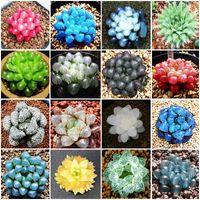 100個鉢植えの多肉植物肉の輝く緑の植物馬院園のための庭の花の種子の花の種子の花の種子緑の樹皮