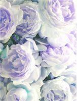 10 قطعة / الحقيبة مختلط لون بذور الفاوانيا الصينية روز شجرة الفاوانيا بذور جميلة الديكور بونساي زهرة النبات للمنزل حديقة
