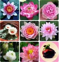 2 Pçs / saco Flor Tigela Sementes de Flores de Lótus Hidropônicas Plantas Aquáticas Lótus Sementes Perenes Lírio de Água Planta Para Mini Jardim