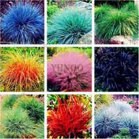 100 pcs / sac graines de fétuque (Festuca glauca) graines tolérantes à la sécheresse graines d'herbe ornementales vivaces plantes à bonsaï bricolage jardin