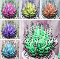 30 Graines Colorées Rare Cactus Aloe Seed, Cactus Rebutia Variété Mix Exotique Cactées Floraison, Bureau Mini Plante Succulentes Graines