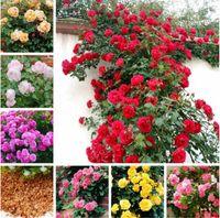 100pcs Escalada Rosas mezcladas semillas de flor china de Jardines Bonsai flor de las rosas luz de la planta hasta su jardín personal