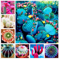 Hot 50 pcs/bag Mixture Of Cactus Seeds Rare succulent plants for home and garden, High Germination