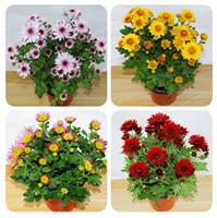 100 pezzi di crisantemo semi di bonsai bello fiore perenne casa giardino piante spray crisantemo bellezza il tuo giardino
