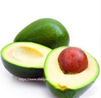 10 개 아보카도 씨앗 녹색 과일 매우 맛있는 페르시아 아메리 카밀 씨앗 씨앗 자라기 쉽고, 과일 씨앗을 심고 정원 식물