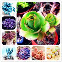 100 unids / bolsa semillas suculentas echeveria suculentas lithops semillas bonsai semillas de flores planta de interior para el jardín de su casa purificar el aire