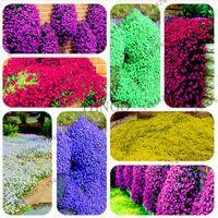 200 PCS Mixed Color Rock Cress Creeping Timme Fröer Perennial Flower Ground Cover Blomma för DIY Garden Dekoration